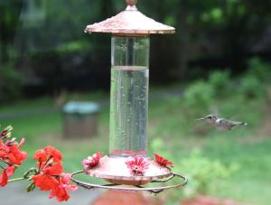 hummingbird feeder 3