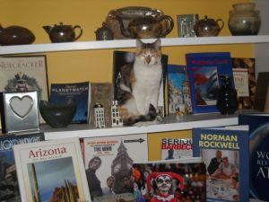 callie on the shelf