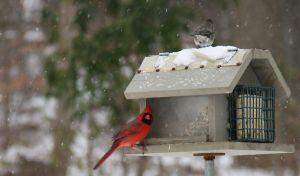 bird feeder snow storm 3