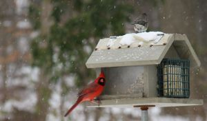 bird feeder snow storm 3