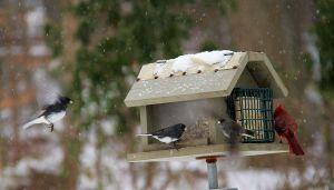 bird feeder snow storm