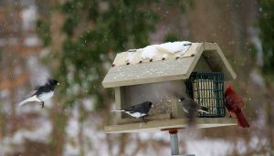 bird feeder snow storm