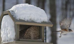 birds blizzard 3 for contest