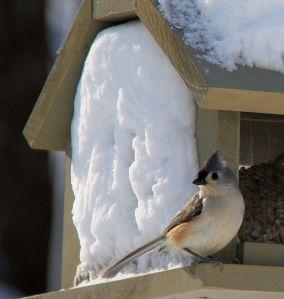 birds blizzard 5