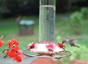 hummingbird feeder 1