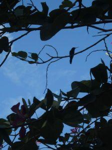 hummingbird resting tropical plant