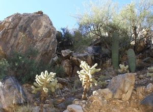 Sabino canyon t