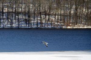 snow day seagull 2 jan 3