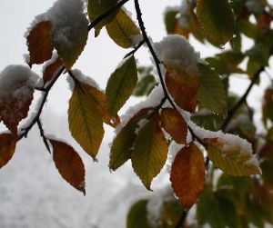 snow oct 29 7