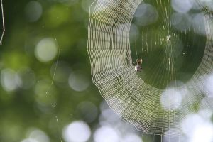 spider web close up